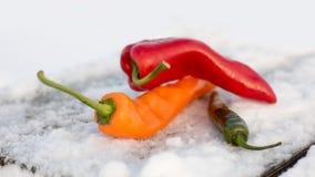 Peper op Sneeuw Zachte bokehachtergrond stock fotografie