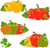 Peper, reeks gele, rode, groene en oranje peper en peterseliebladeren, illustratie Stock Afbeeldingen