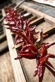 Peper rosso Fotografia Stock Libera da Diritti