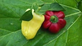 Peper twee op rabarberblad Stock Afbeeldingen