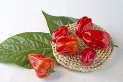 Peperoncini del Habanero Immagine Stock