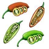 Peperoncini disegnati a mano verde e rosso royalty illustrazione gratis