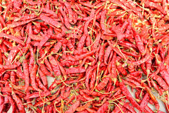 Peperoncini rossi asciutti Fotografie Stock Libere da Diritti