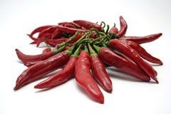 Peperoncini rossi caldi Immagine Stock