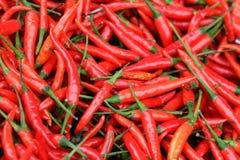 Peperoncini rossi caldi Immagine Stock Libera da Diritti