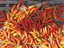 Peperoncini rossi caldi! Fotografia Stock Libera da Diritti