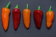 Peperoncini rossi caldi 02 Fotografia Stock