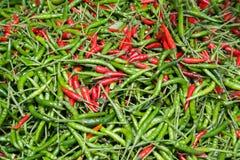 Peperoncini rossi caldi organici Immagini Stock