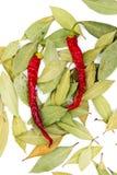 Peperoncini rossi del Na della foglia di alloro Immagine Stock