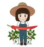 Peperoncini rossi del raccolto della piantatrice Immagine Stock Libera da Diritti