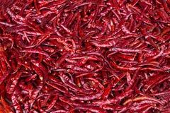 Peperoncini rossi freddi rossi asciutti Fotografie Stock