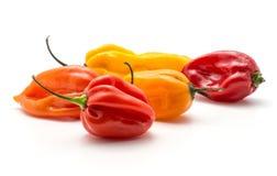 Peperoncini rossi freschi del Habanero isolati su bianco Fotografia Stock Libera da Diritti
