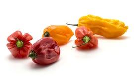 Peperoncini rossi freschi del Habanero isolati su bianco Immagini Stock Libere da Diritti