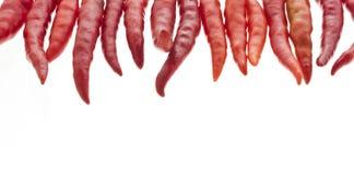 Peperoncini rossi rossi Immagini Stock