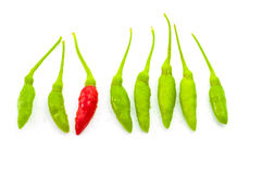 Peperoncini rossi rossi fra i peperoncini rossi verdi Immagine Stock