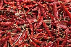 Peperoncini rossi rossi secchi Fotografie Stock