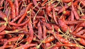 Peperoncini rossi rossi secchi Immagini Stock Libere da Diritti