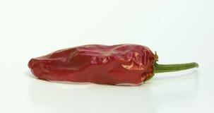 Peperoncini rossi rossi secchi Immagini Stock