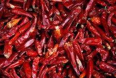 Peperoncini rossi rossi secchi Immagine Stock Libera da Diritti