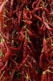 Peperoncini rossi rossi secchi Immagine Stock