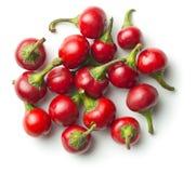 Peperoncini rossi rotondi Fotografie Stock Libere da Diritti