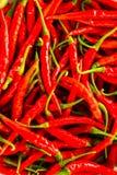 Peperoncini rossi roventi Fotografia Stock Libera da Diritti