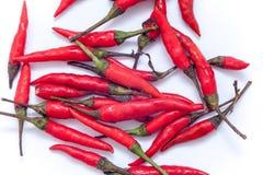 Peperoncini rossi roventi tailandesi sui precedenti bianchi, isolante rovente dei peperoncini rossi Immagine Stock Libera da Diritti