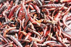 Peperoncini rossi secchi fotografie stock libere da diritti