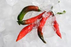 Peperoncini rossi su ghiaccio Immagini Stock