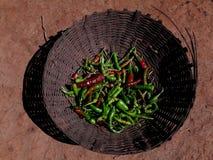 Peperoncini rossi verdi in contenitore di bambù Fotografie Stock