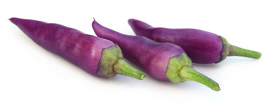 Peperoncini viola freschi isolati Fotografia Stock