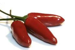 Peperoncino rosso Fotografia Stock Libera da Diritti