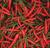 Peperoncino rosso Fotografie Stock