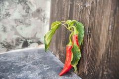 Peperoncino rosso rosso con le foglie vicino su e lo spazio della copia Peperoncino brutto fotografia stock libera da diritti