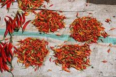 Peperoncino rosso rosso da vendere Fotografie Stock