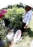 Peperoncino rosso del raccolto Immagine Stock Libera da Diritti