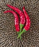 Peperoncino rosso & girasole Immagine Stock Libera da Diritti