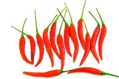 Peperoncino rosso piccante tailandese Fotografia Stock