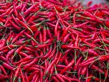 Peperoncino rosso rosso Fotografia Stock