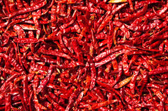 Peperoncino rosso rosso al sole, la Tailandia Immagine Stock