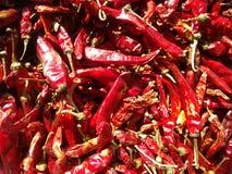 Peperoncino rosso rosso asciutto Immagine Stock