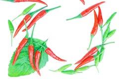 Peperoncino rosso rosso e verde caldo e piccante Fotografia Stock Libera da Diritti