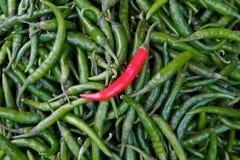 Peperoncino rosso rosso specifico che si leva in piedi fuori sul chillie verde Immagini Stock