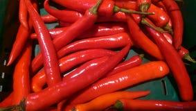 Peperoncino rosso rovente Fotografia Stock
