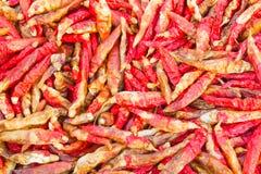 Peperoncino rosso secco Immagine Stock Libera da Diritti