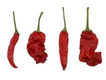 Peperoncino rosso tailandese rosso secco e peperoncino rosso del pepe di peter isolato su fondo bianco fotografia stock