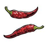 Peperoncino rosso Vector l'illustrazione incisa annata per il menu, il manifesto, web Su fondo bianco Fotografie Stock Libere da Diritti
