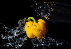 Peperone dolce giallo con la spruzzata dell'acqua sul nero Immagini Stock Libere da Diritti