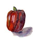 Peperone dolce rosso Pittura disegnata a mano dell'acquerello sul fondo bianco, Fotografia Stock Libera da Diritti