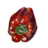 Peperone dolce rosso Pittura disegnata a mano dell'acquerello sul fondo bianco, illustrazione dell'alimento biologico Fotografia Stock Libera da Diritti